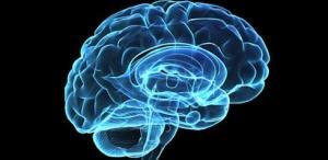 Falacia de la dominancia de los hemisgferios cerebrales
