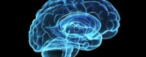 Falacia sobre la dominancia de los hemisferios cerebrales